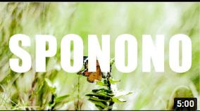 Sir Trill ,Musa Keys & Boohle ft De Mthuda – Sponono